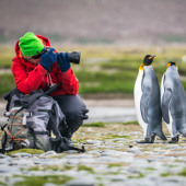 photographing penguins -