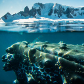 Whale - Antarctic Peninsula with South Shetland Islands