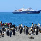 Coming ashore - 福克兰群岛 – 南乔治亚 – 南极半岛