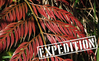 Taiwan plant hunting expedition 2021